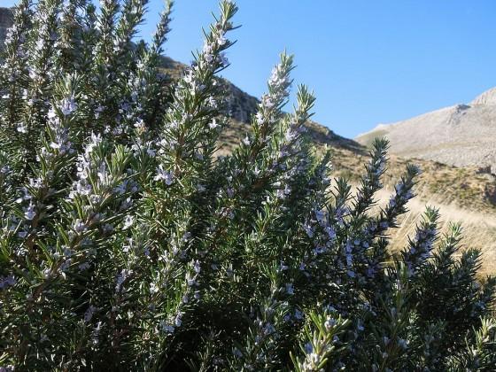 Flora della Riserva dello Zingaro