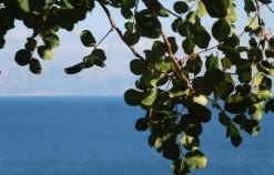 Riserva dello Zingaro: un'esperienza naturale tra macchia mediterranea e riflessi turchesi