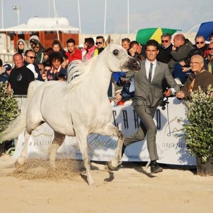 Trapani Arabian Horses Cup a San Vito Lo Capo
