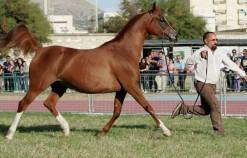 Trapani Arabian Horses Cup - 11 e 12 Aprile San Vito Lo Capo