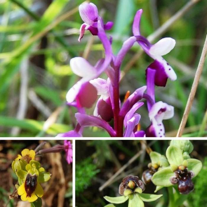 Trekking di Primavera lungo il Sentiero delle Orchidee nella Riserva dello Zingaro.