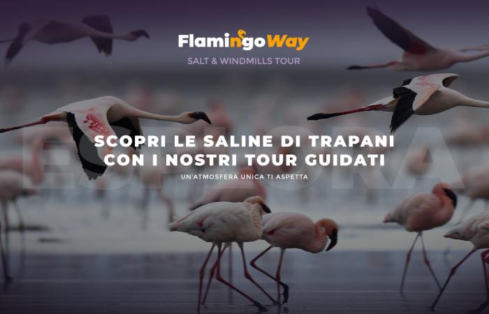 Scopri la Riserva delle Saline di Trapani con i Tour di Flamingo Way